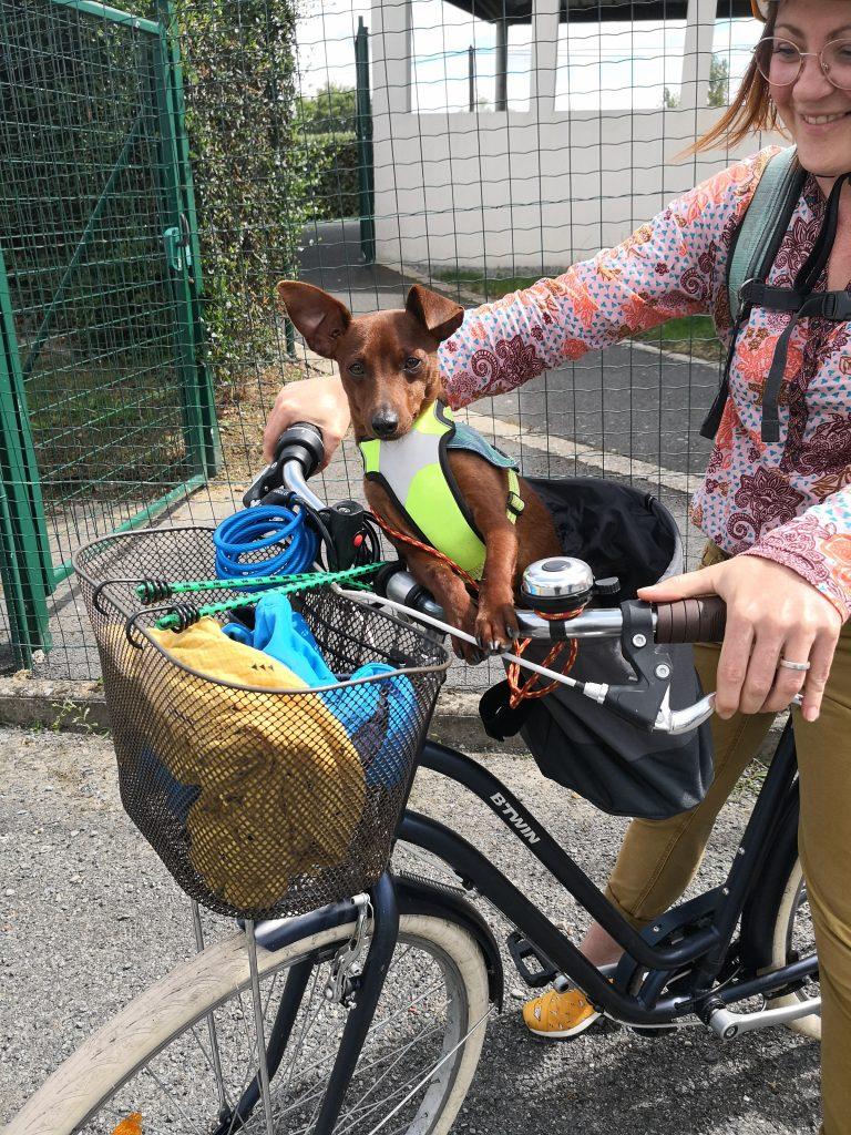 Chien dans panier de vélo