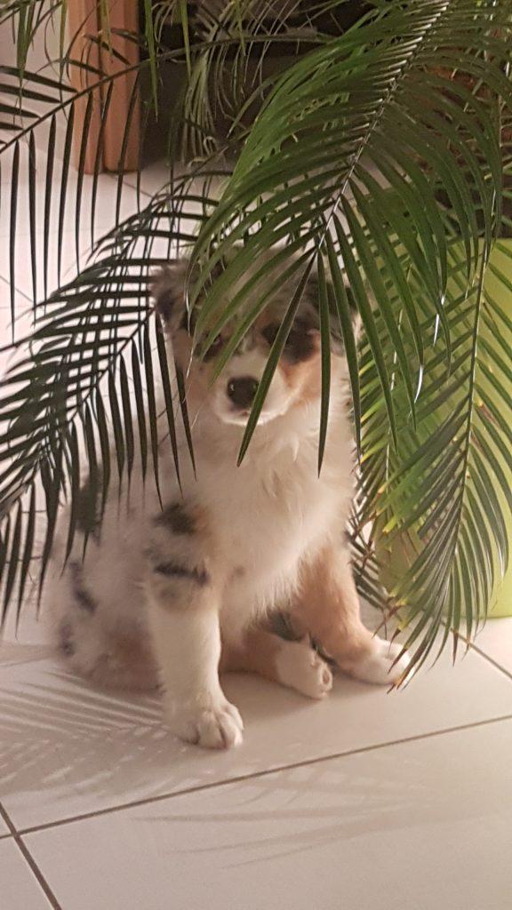 Chiot caché derrière une plante