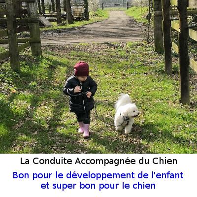 Conduite Accompagnée du Chien au Colloque de la Fondation Sommer le 10/12/2018